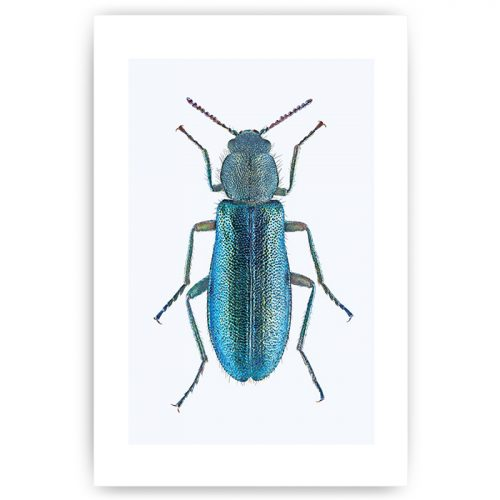 poster insect kever