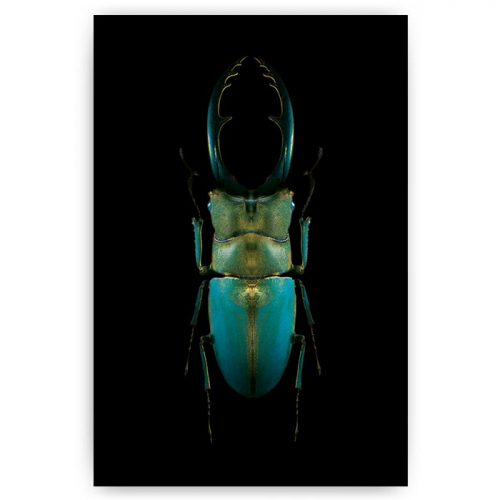 poster kever insect