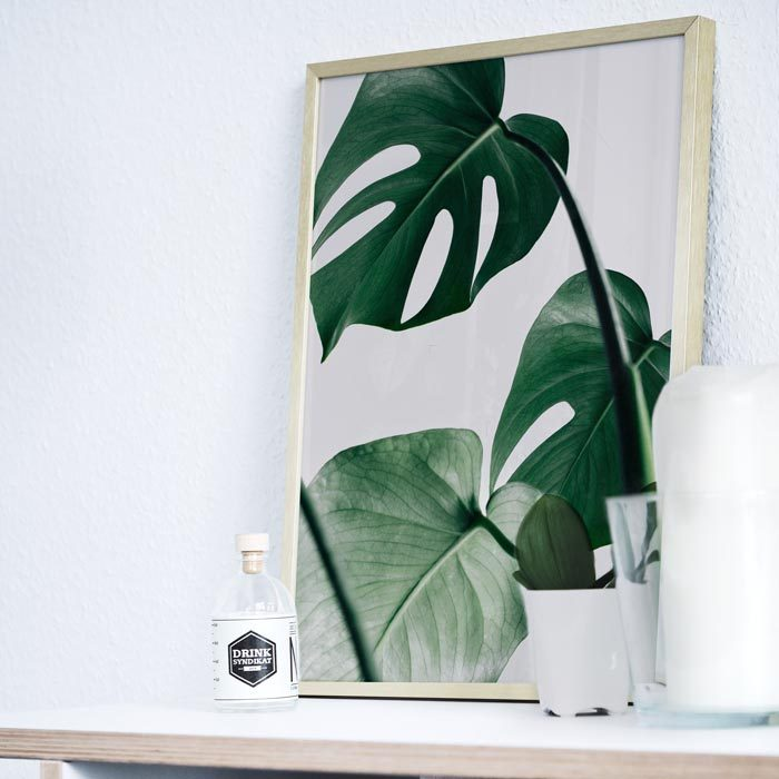poster monstera plant