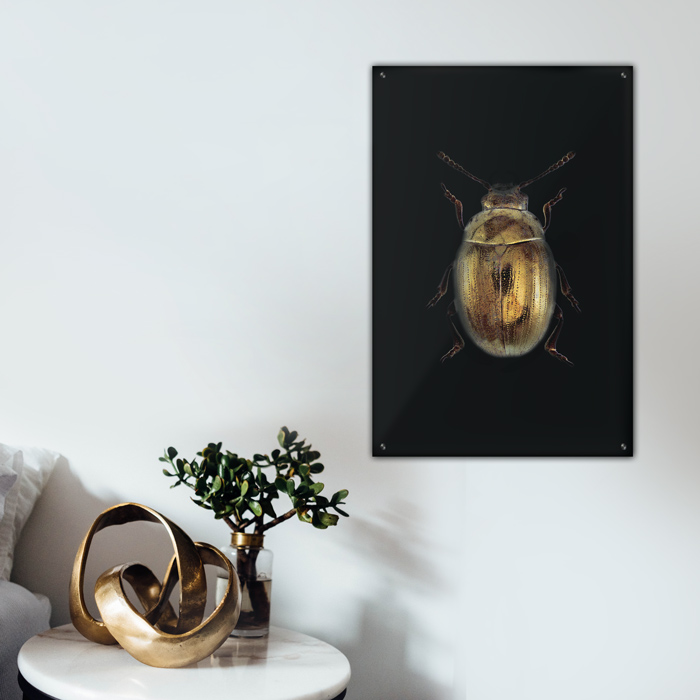 Gouden insect kever interieur