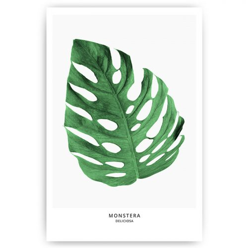poster monstera blad groen