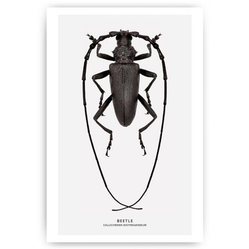 poster insect