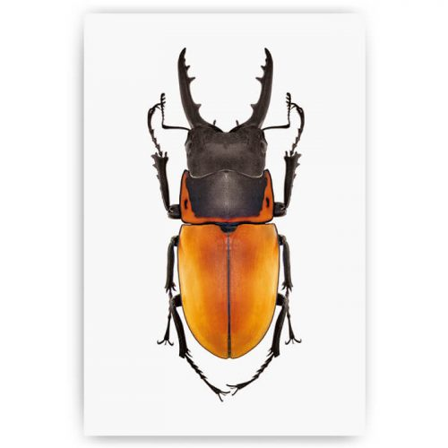 poster insect kever oranje