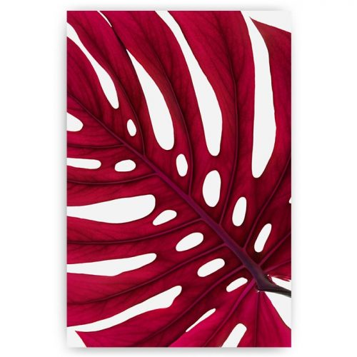 poster monstera blad rood
