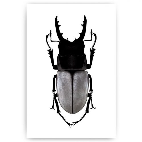 poster kever insect zilver
