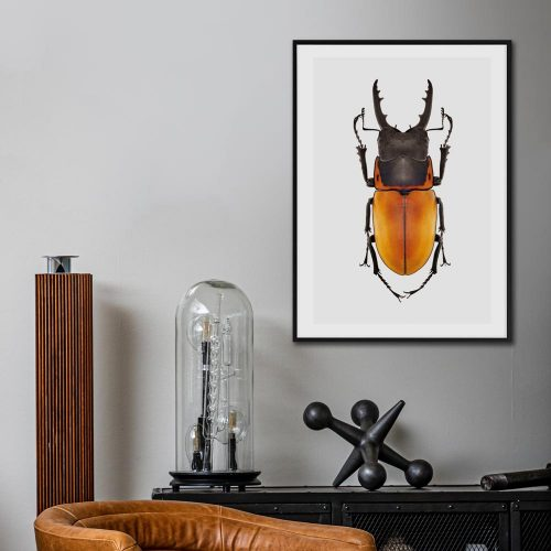 poster oranje kever insect