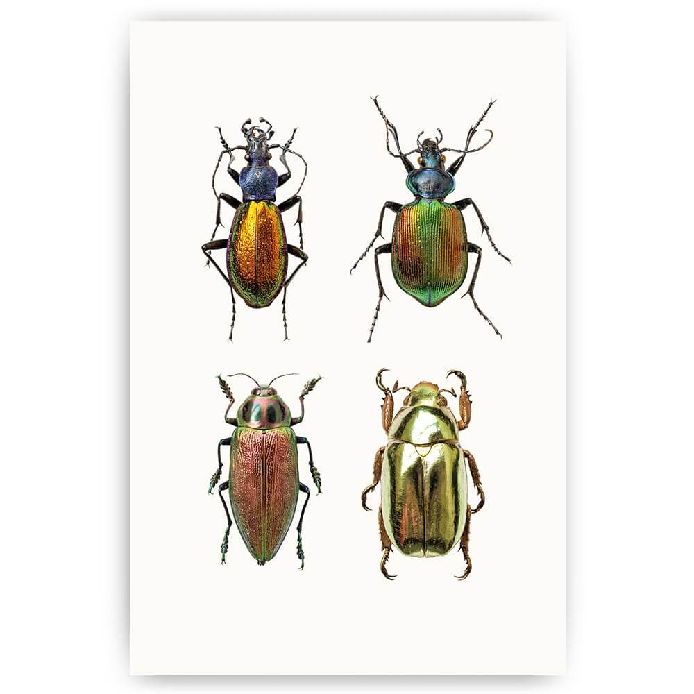 poster diverse insecten
