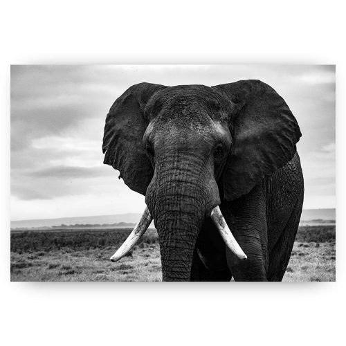poster olifant in landschap