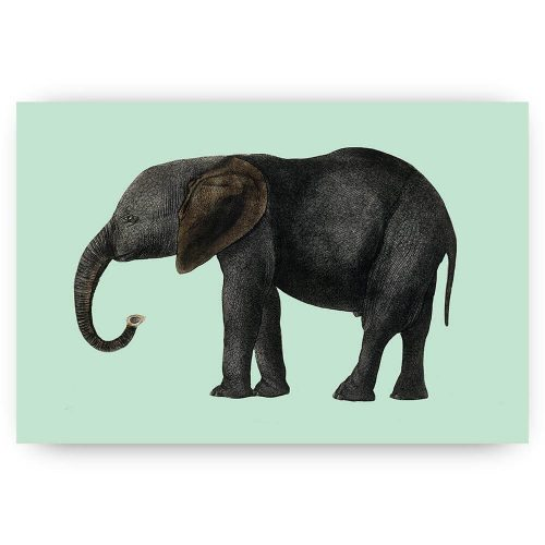 olifant illustratie